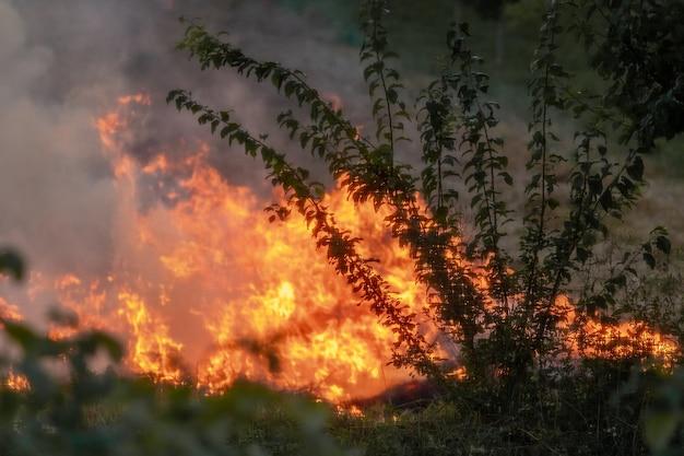 Огонь и густой дым в лесу. пожар в лесу из-за неосторожного обращения с огнем