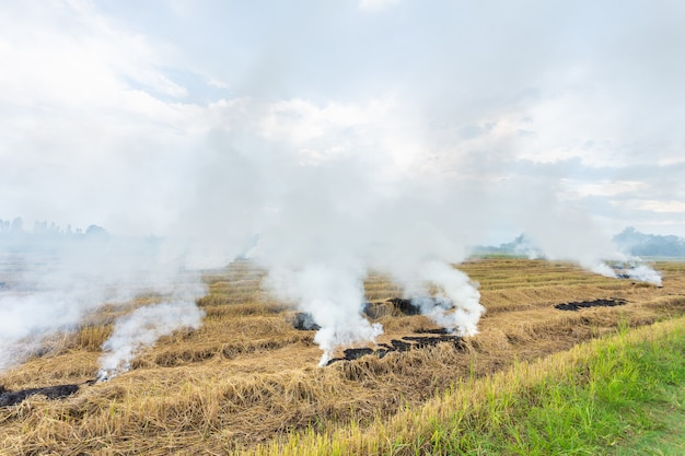 Fire burning dry rice straw in the field