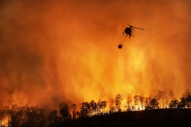 Fire fighting helicopter extinguishing a forest fire