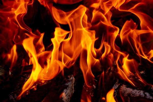 黒の背景に輝く火の炎 Premium写真