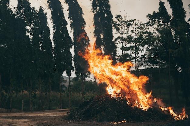 숲에 불길