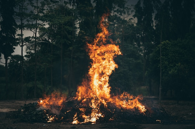Огонь пламя в лесу