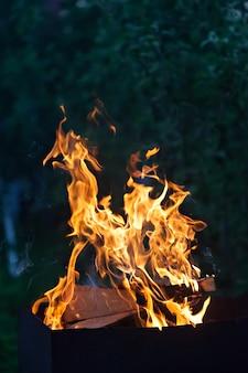 Fire flames. vertical