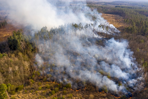 Fire in the forest, zhytomyr region, ukraine.