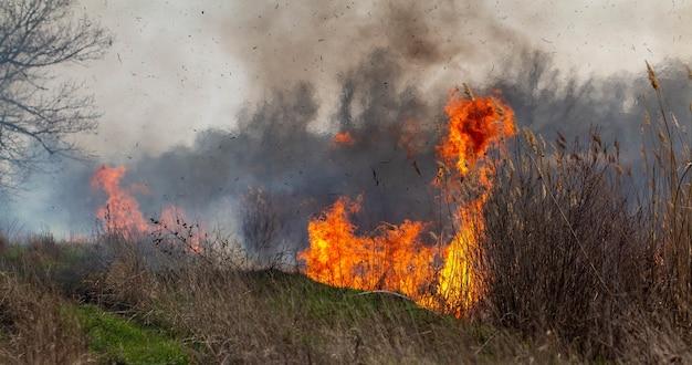 Огонь. на поле горит трава. пламя огня крупным планом.