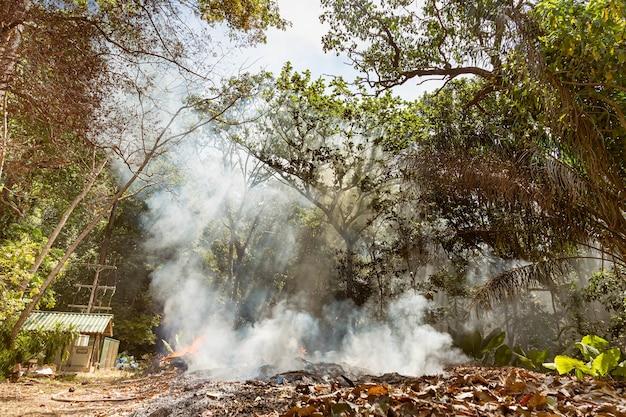 뜨거운 기후로 인한 열대 우림의 화재 많은 연기와 재의 태양 광선이 나무를 관통합니다