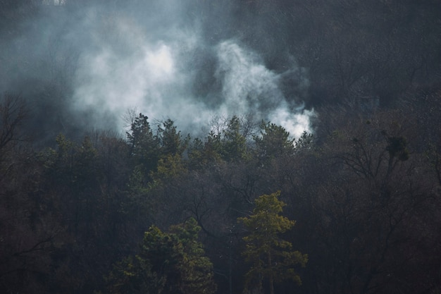 Огонь в лесу дым над деревьями зеленая ель и серый дым