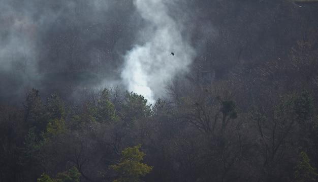 숲 속의 불 나무 위의 연기 녹색 가문비나무와 회색 연기