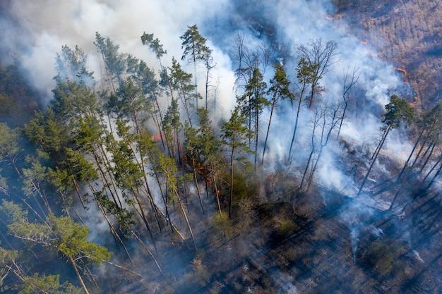 森林、ジトームィル地域、ウクライナで火災。