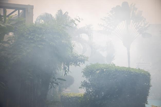Огонь в тропическом лесу. пальмы в дыму.