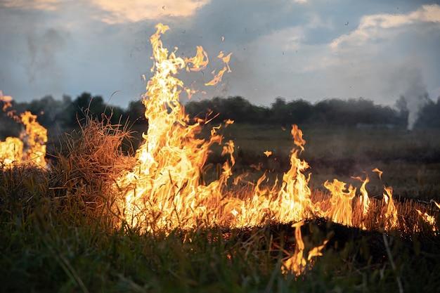 草原で火がつき、草が燃え、その道のすべてを破壊します。