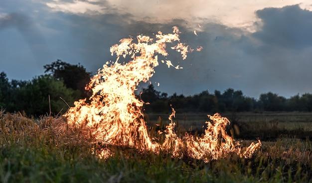 草原で火がつき、草が燃え、その道のすべてを破壊している。