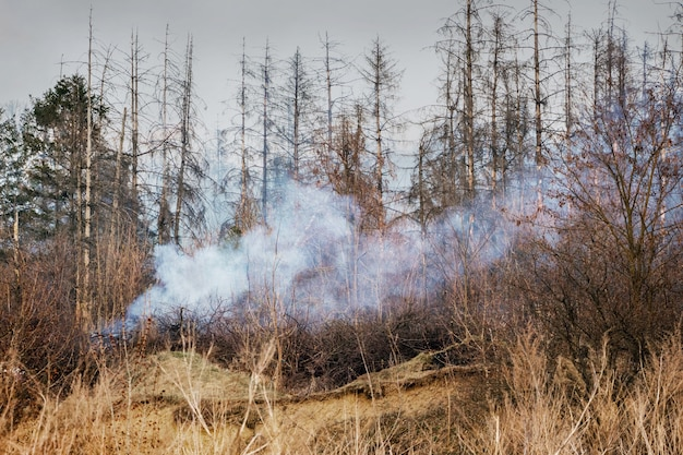 乾燥した天候の間に森の中で火事。森の木が燃えて、煙が行く