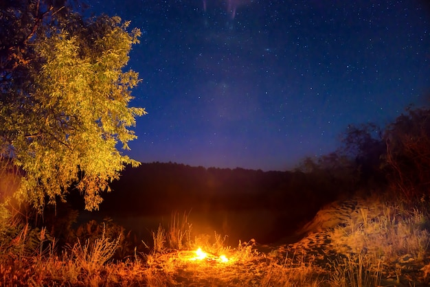 Fire at night in the forest under night sky with stars