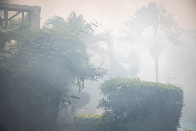 Fire in the rainforest. palm trees in smoke.