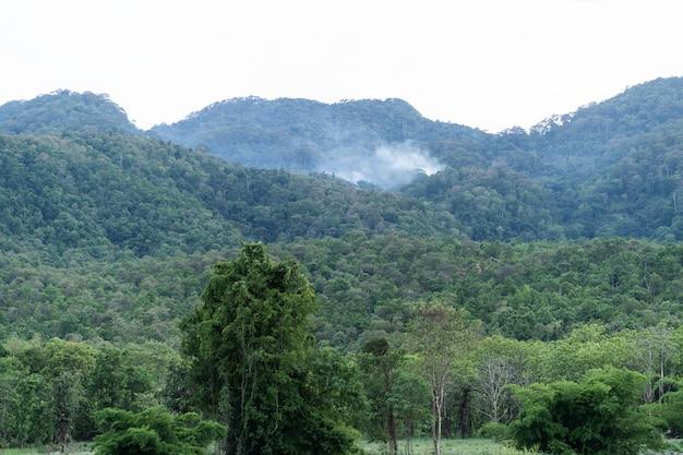 Огонь дым в лесу горы