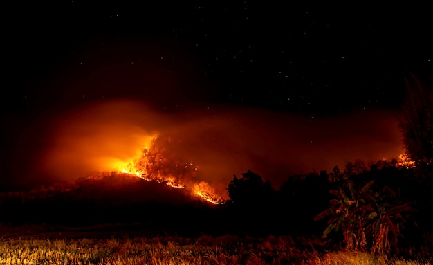 The fire was burning trees on the mountain at night with all stars in the sky.