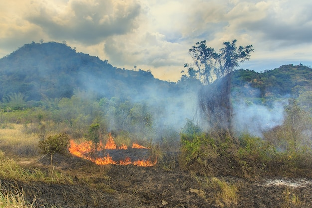 Fire with a lot smoke in forest of thailand