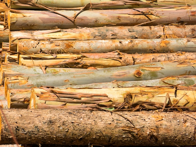 Fire wood eucalyptus texture background