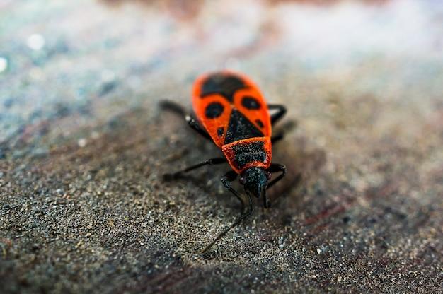 Firebug на деревянной поверхности.