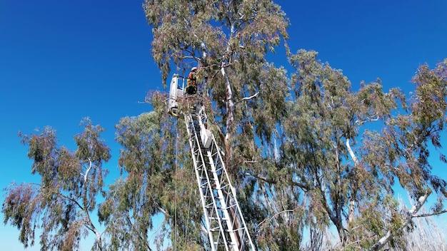 屋外のはしごの上に消防士の救助の木。