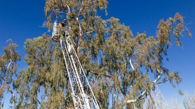 はしごの上に消防士の救助の木。