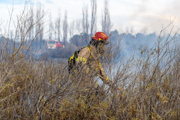Firefighters put out a fire in the forest