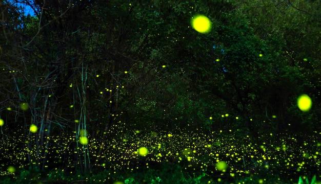Светлячки в кустах ночью в удонтхани таиланде.