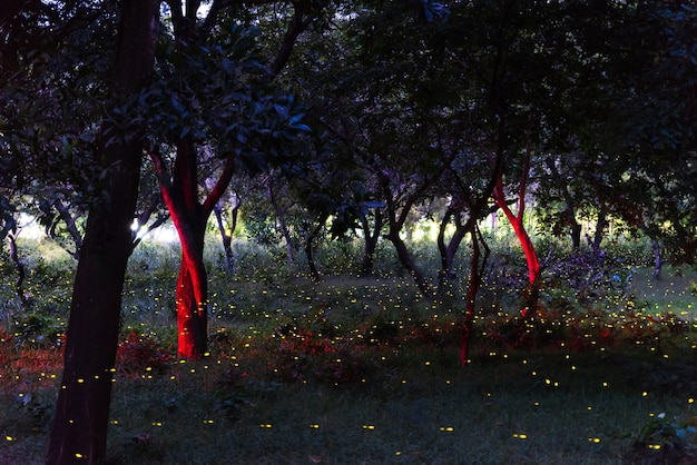 Firefly flying in the night forest in thailand, long exposure with grain.