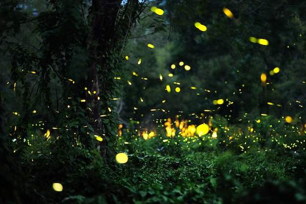 포레스트에서 반딧불