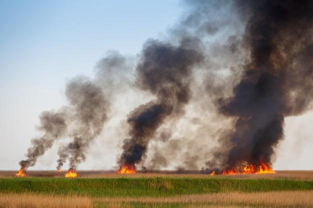 古いサトウキビの乾いた野原を火事で破壊