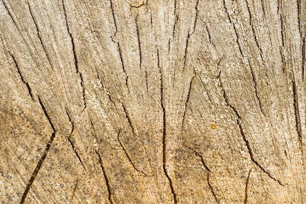 薪と木 Premium写真