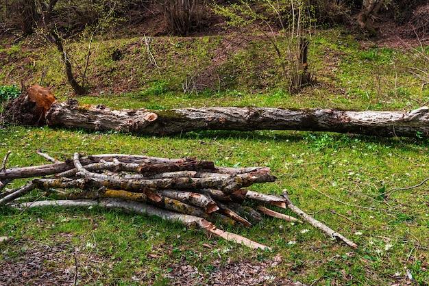 緑の森の薪