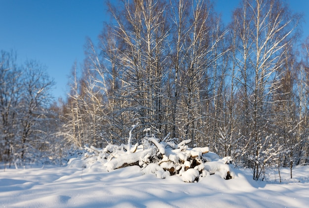 Firewood under the snow in winter forest