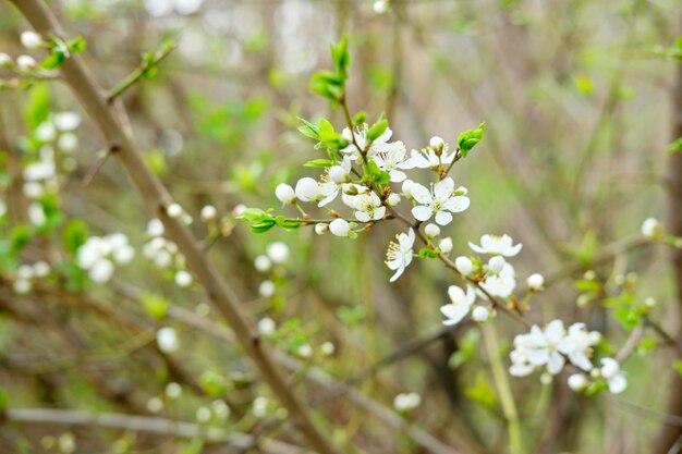 最初に咲く木。初春開花