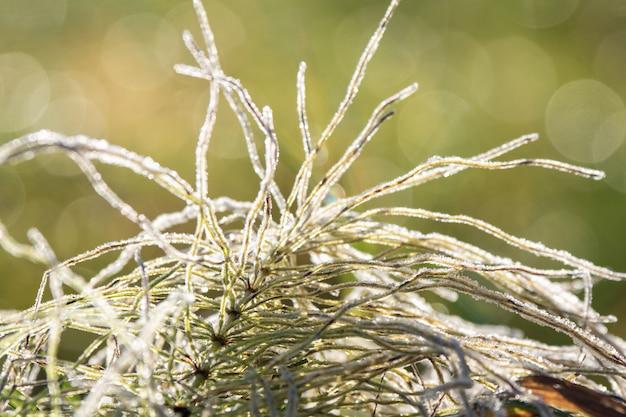 Первый мороз иней на листьях. зима морозная абстракция натуральная