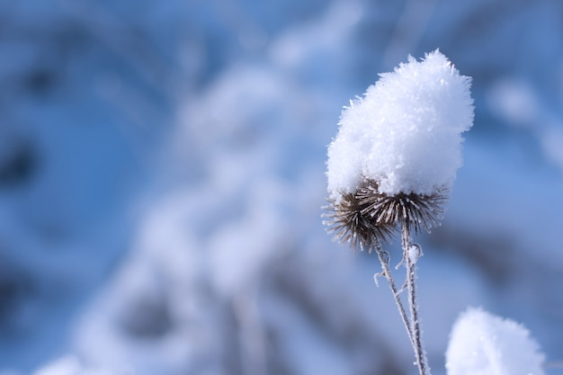 凍った葉の最初の霜の詳細