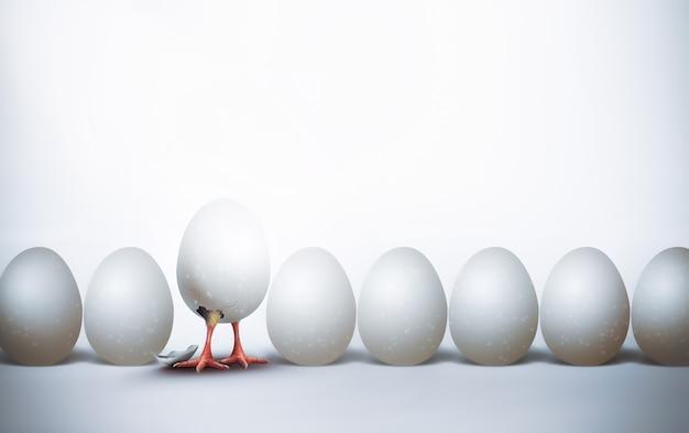 첫 번째 부화 닭 껍질, 3d 컨셉 디자인 이미지