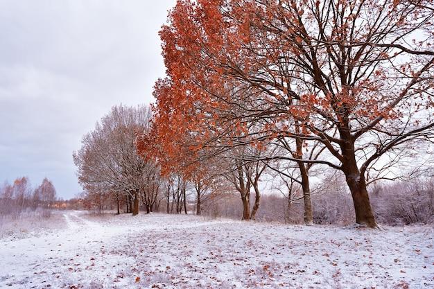 秋の公園で最初の雪。木の紅葉。