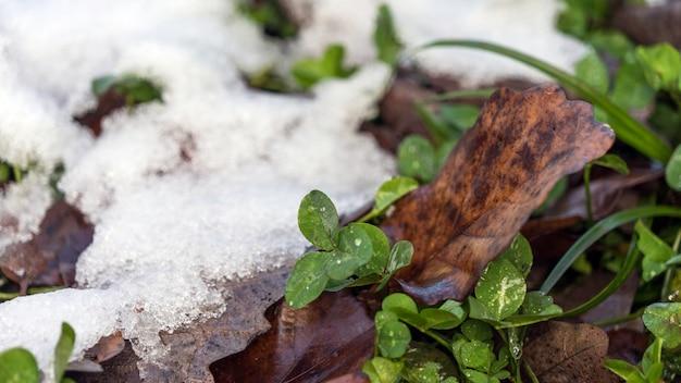 最初の雪は枯れた落ち葉の隣の緑の草の上にありますクラスナヤポリャナロシア