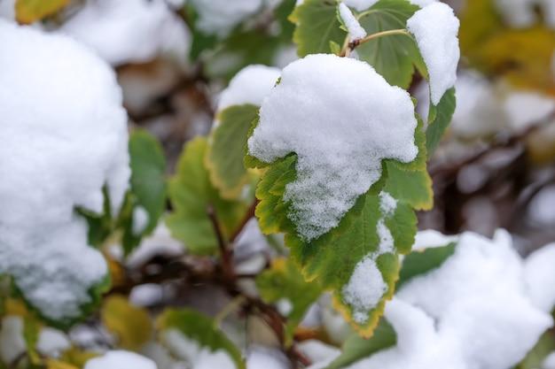 住宅の近くの都市公園の植物の緑の葉に最初の雪