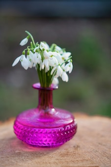 The first spring flowers of snowdrops (galanthus nivalis) in a fuchsia vase on a hemp. snowdrops, a sign of spring.