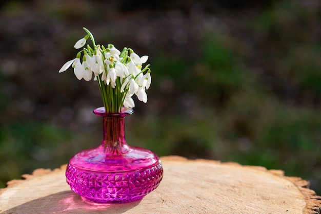 The first spring flowers of snowdrops (galanthus nivalis) in a fuchsia vase on a stump. snowdrops, a sign of spring.