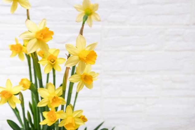 最初の春の黄色い咲く水仙の花