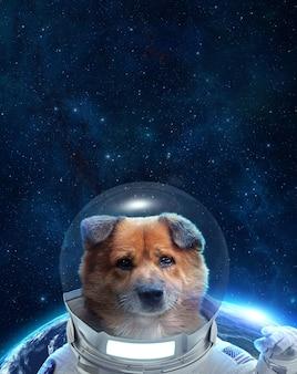 우주로의 첫 여행 우주복을 입은 개 우주 비행사 우주에서 개 우주 비행사의 초상화