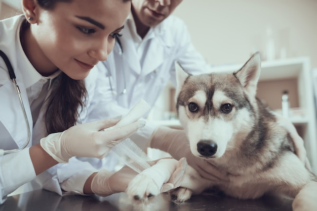 First veterinarian aid in clinic bandage for paw