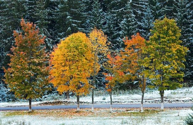 Первый зимний снег и осенняя разноцветная листва возле горной второстепенной дороги (карпаты, украина)