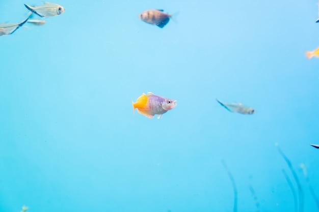 Рыбы и пейзаж в аквариуме