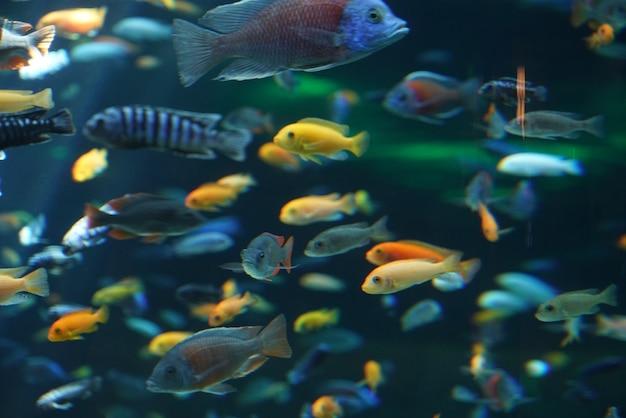 수족관의 물고기와 풍경