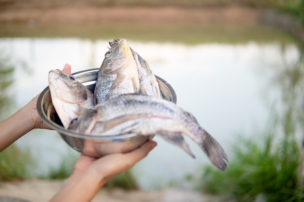 Fish in bowl on hand for cooking on blurred pond nature